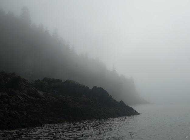 Amalga Fog