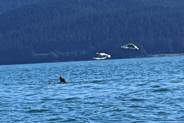 Harasssed Sea Lion