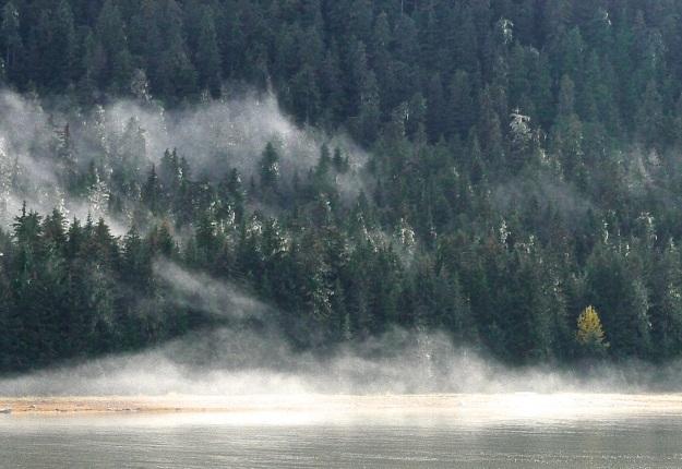 nine mile fog
