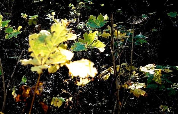ravaged leaves