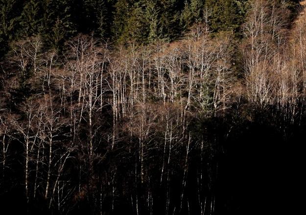 Mt. Juno trees
