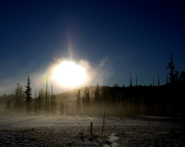 sun through fog