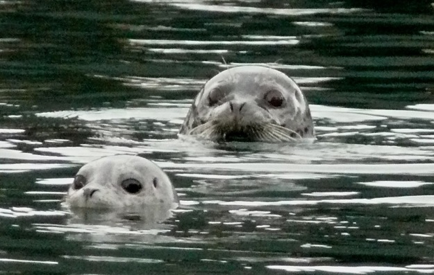 seal family